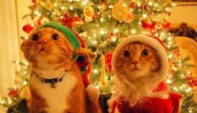 O Vánocích bude Kukátko zavřené